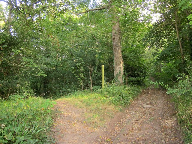 Paths, East Wood