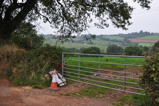 Mid Devon : Grassy Field & Gate