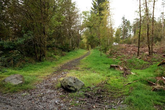 Penninghame path 7