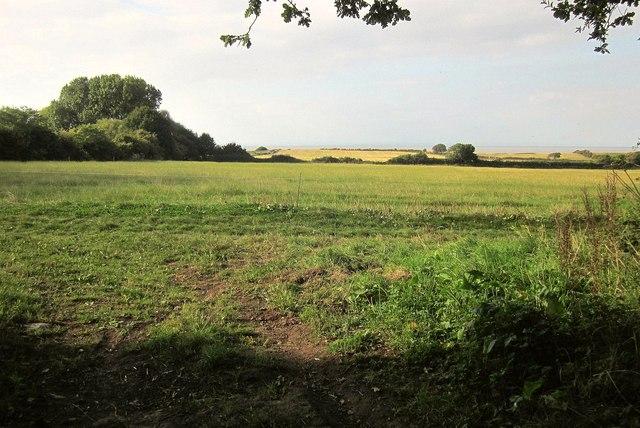 Field by East Wood
