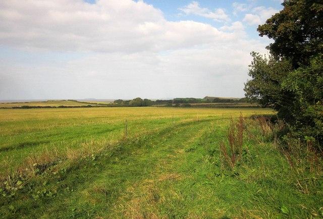 Footpath alongside East Wood
