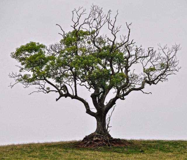 Mid Devon : Tree