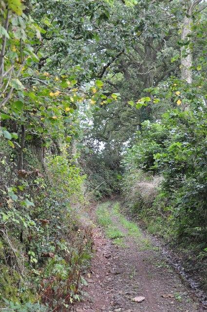 Mid Devon : Whitemoor Lane