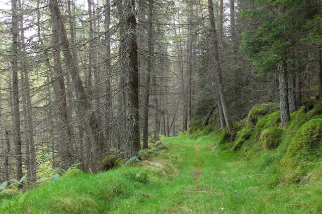 Track in Logierait Woods