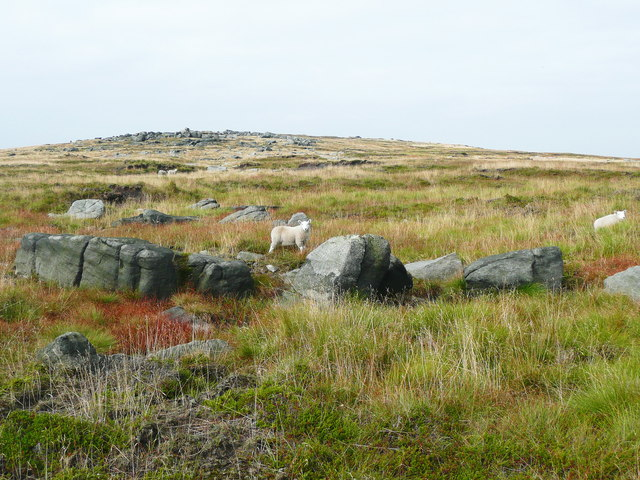 Small rocks and a sheep on Sun End