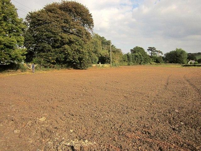 Field by the churchyard. Kilve