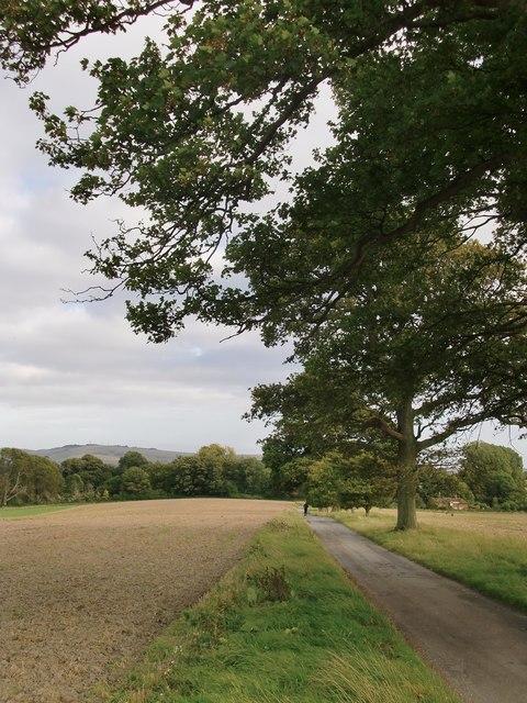 Mouse Lane: minor road across farmland on the Wiston Park Estate