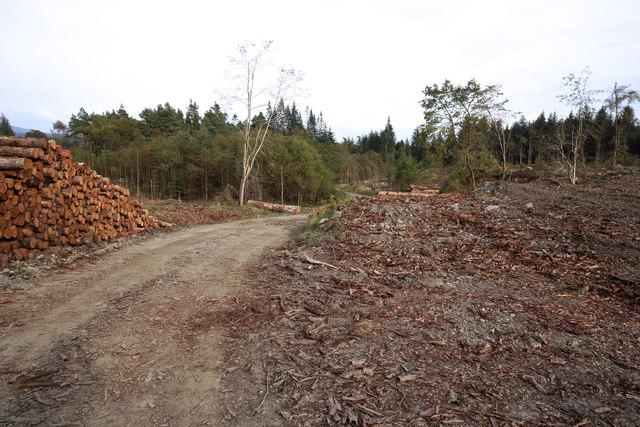 Glenrazie Wood 1