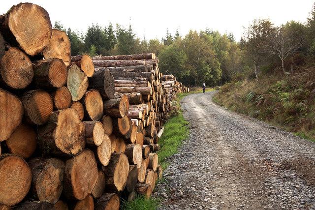 Glenrazie Wood 3