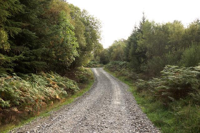 Glenrazie Wood 5