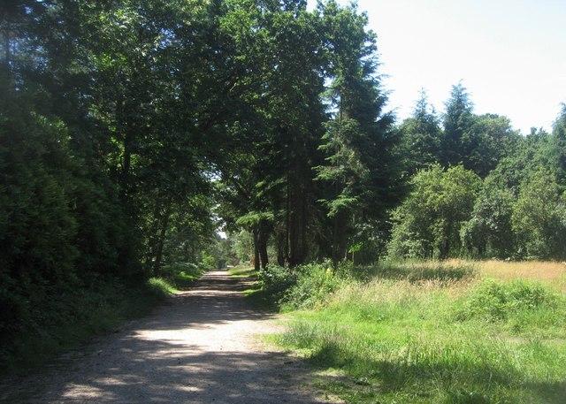 Track in Hawley Wood