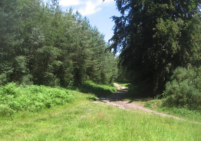 Track in Hawley Wood