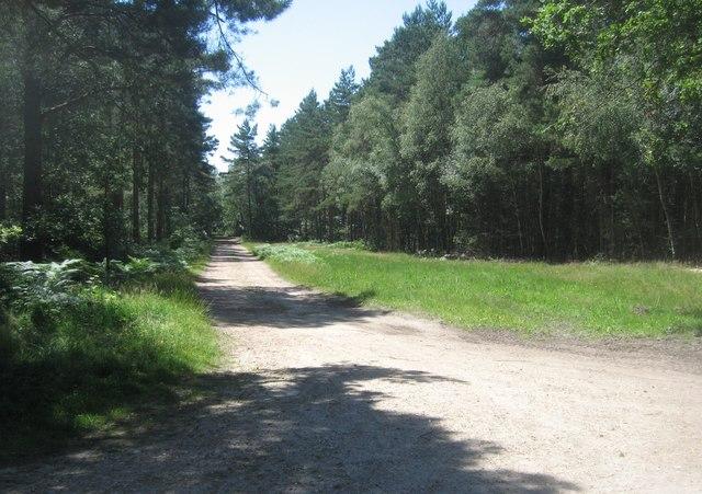 Track to Hawley Lake