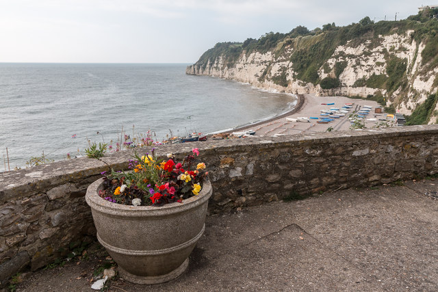 Floral Display and the Beach, Beer, Devon