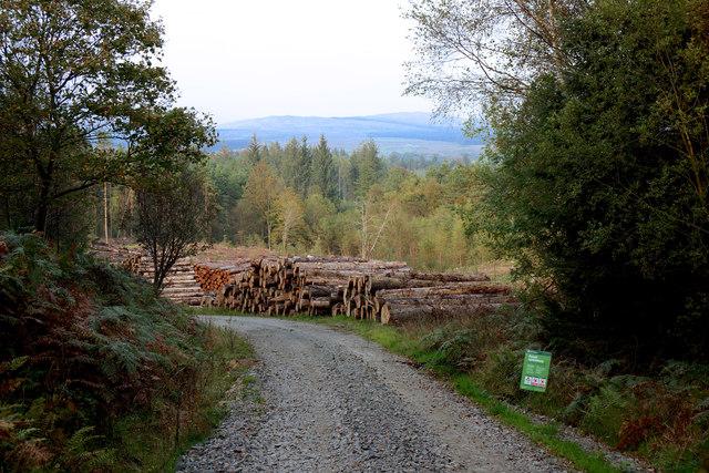 Glenrazie Wood 11