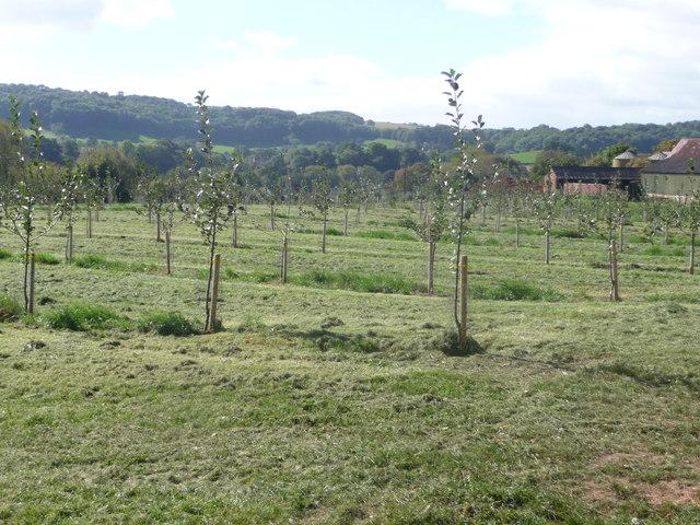 New Orchard, Little Lambswick