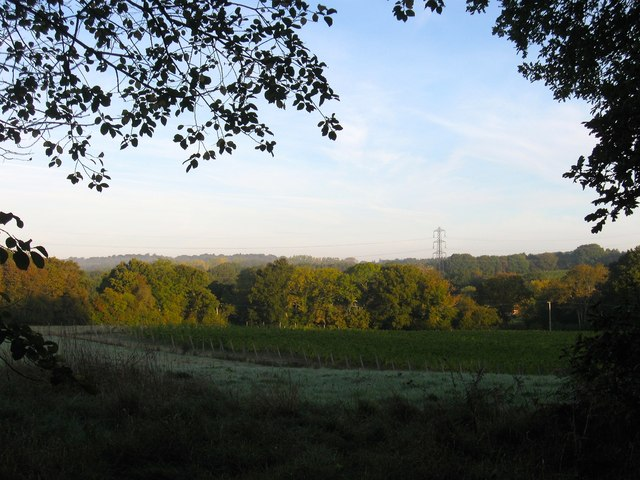 Hog Trough Field/Hilly Field/Bit Field