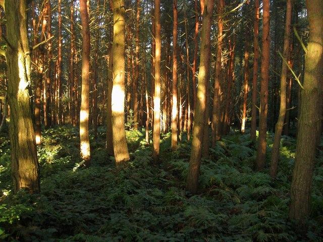 Naillard's Wood