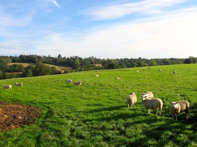Steele's Field