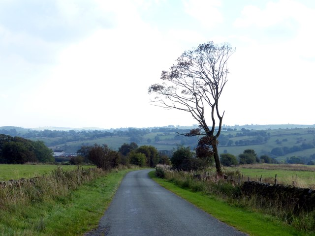 Windblown tree on Stoneyfold Lane