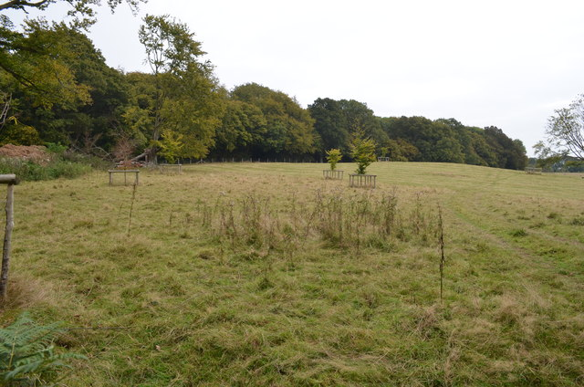 Field with young trees