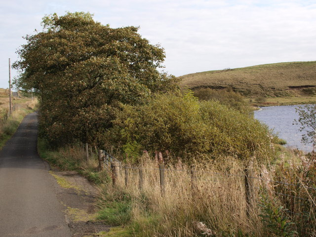 Minor road, little wood and Black Loch