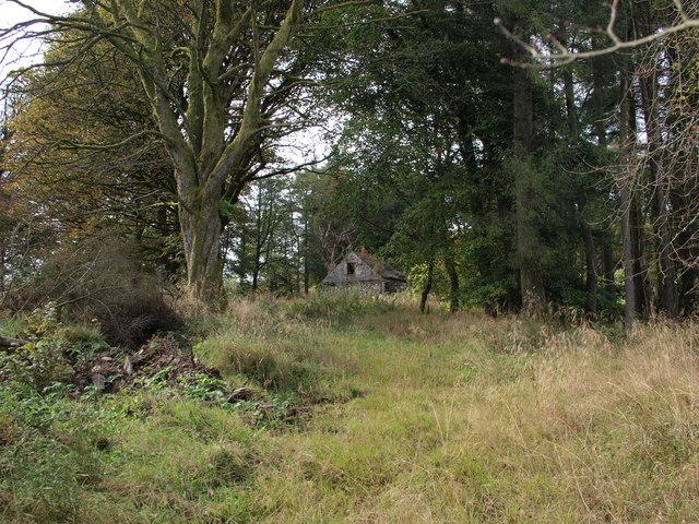 Ruin among trees