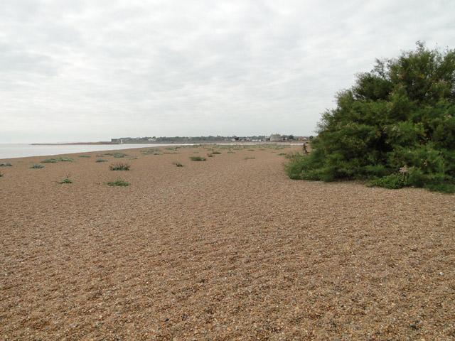 Shingle beach at Bawdsey