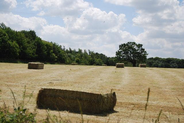 Bales, Argent Manor Farm