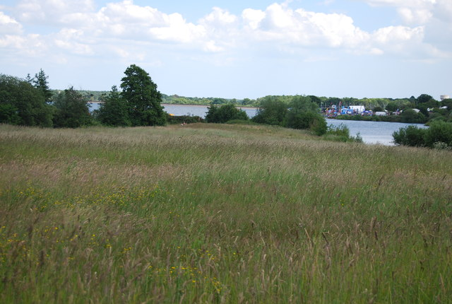 Grasses on the banks of Alton Water