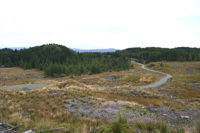Cleared forestry in Inverliever Forest