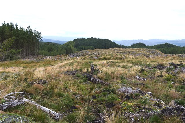 Cleared forestry