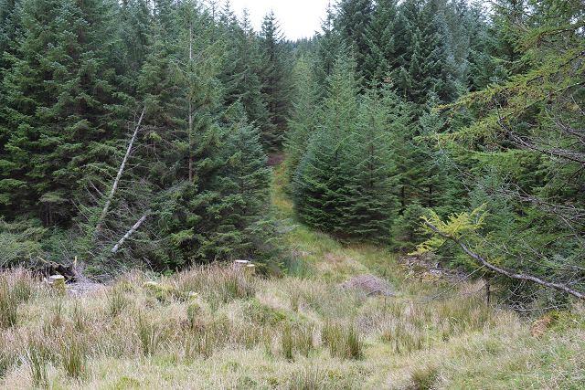 Forestry track near Lochan Lus Dubha