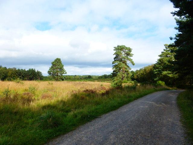 Heathy MoD land