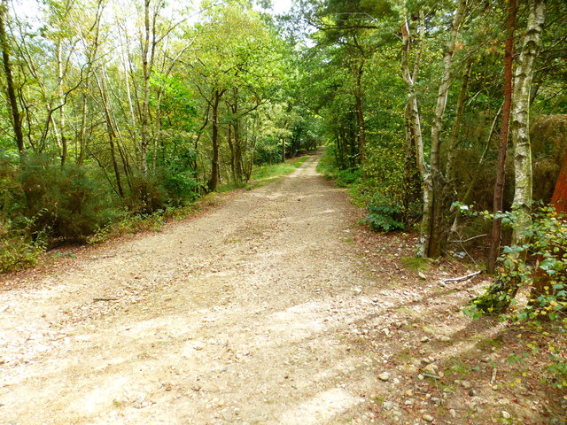 Woodland track on MoD land