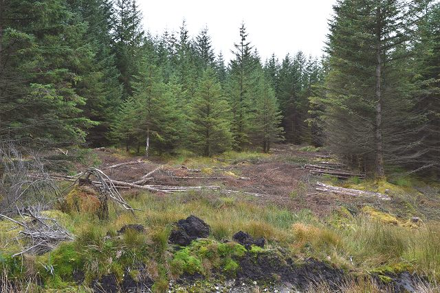 Thinning in Inverliever Forest