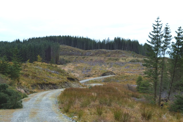 Forest road in Inverliever Forest