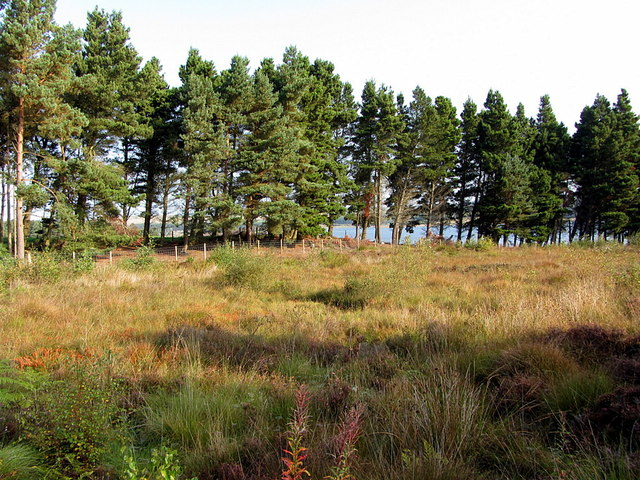 Valley bog, Pow Hill Country Park