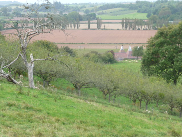 Orchard and Hop barns