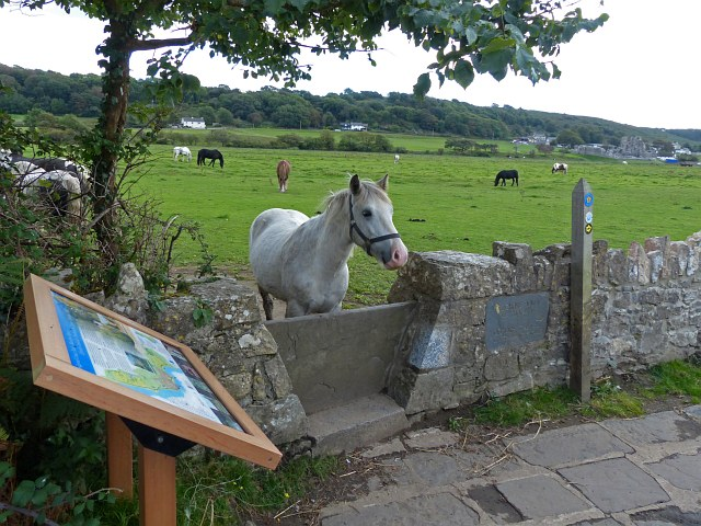 Horse on the Wales Coast Path