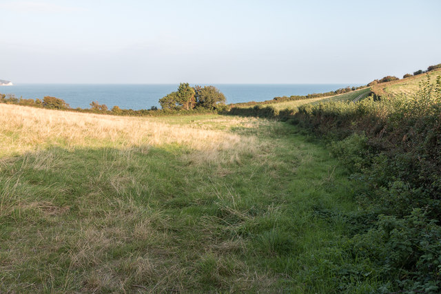 Fields near the Coastal Path, Sidmouth, Devon