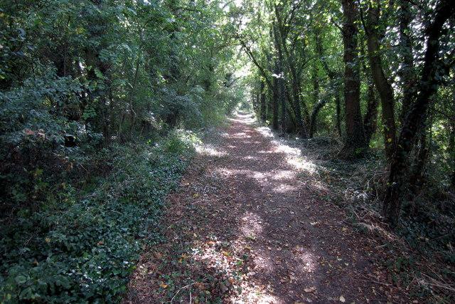 Footpath through the Plantation