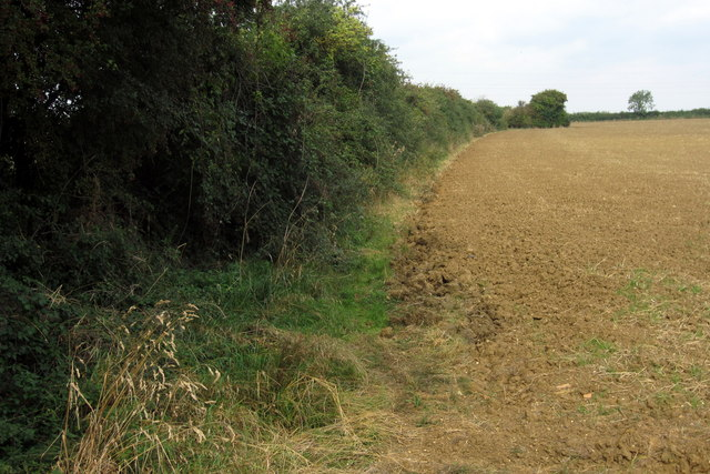 Hedge by Broadlands Farm
