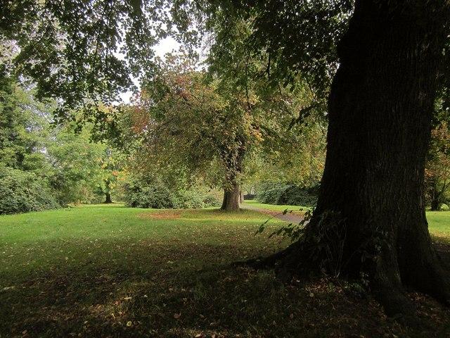 Trees near Westbury Park