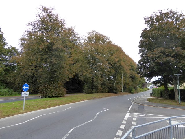 Autumn colour in Crownhill Road, Plymouth