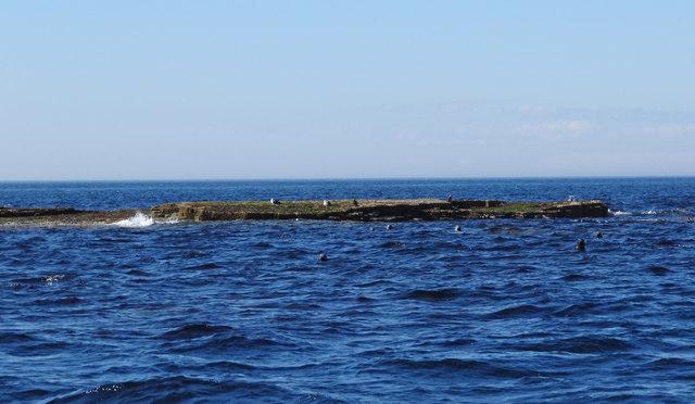 Skea Skerries, Westray Firth