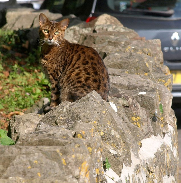 Cat, Old Sodbury