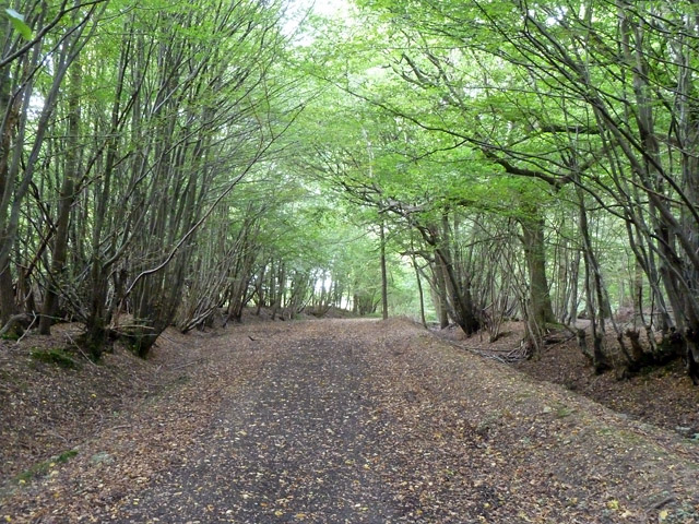 Byway through Leaden Roding Woods