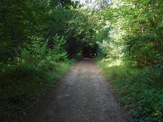 Footpath to East Horsley