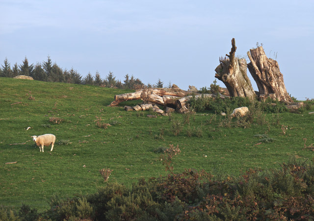 Natural Sculpture with Sheep